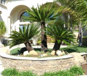 austin landscaping